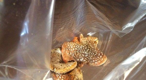 Amanita Muscaria mushroom bag