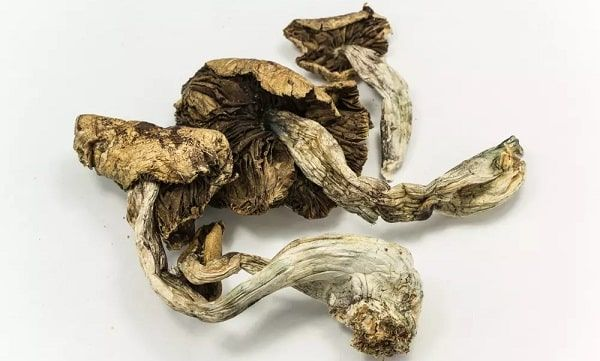 Psilocybe cubensis dried mushrooms